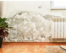 What Should Homeowners and Business Owners Know About Mold Remediation?