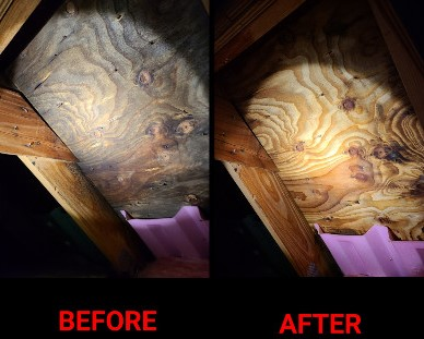 before-after-mold.jpg